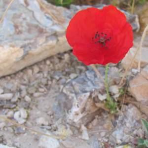 Flower growing on stony ground.